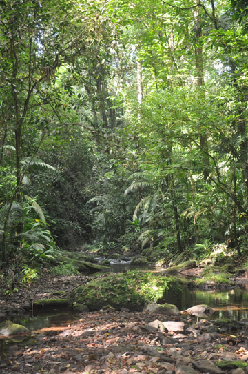 Rainforest lying within the canal zone. Photo by: Christopher Jordan.