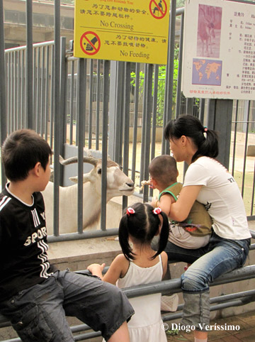 Beijing Zoo in China. Information is rarely enough to change behavior. Photo by: Diogo Veríssimo.