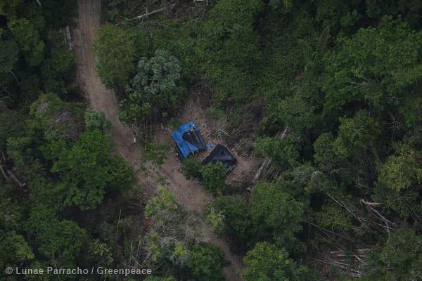 Illegal Logging in Para State, Brazil. Photo by: © Greenpeace.