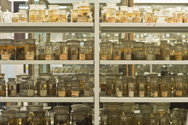 Collection of spiders at Museum für Naturkunde Berlin. Many museum collections are never seen by the public, but still play a role in ongoing research. Photo by: Hannes Grobe/AWI