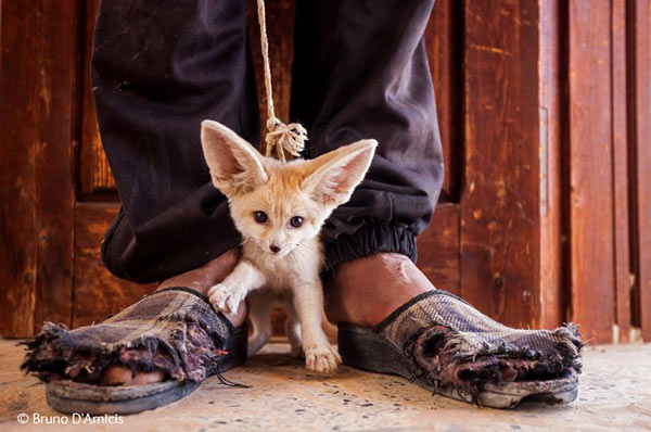 The photo of a teenager in Tunisia selling a fennec fox won this year's World In Our Hands category. Photo by: Bruno D'Amicis / Wildlife Photographer of the Year 2014.