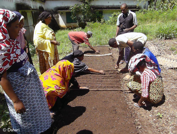 Dahari technician, Inzou, teaching the villagers how to plant in regular lines. Photo by: Dahari.