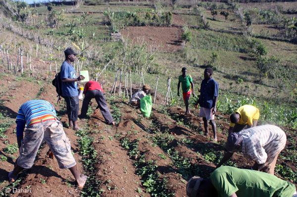 Dahari technician, Kais, conducting a training on potato harvesting. Photo by: Dahari.