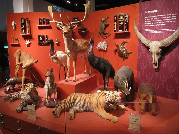 An array of zoological specimens at the Natural History Museum at the University of Oslo. Museums gain specimens not just from scientists, but also from collectors and hunters who sometimes donate their specimens. Photo by: Public Domain.