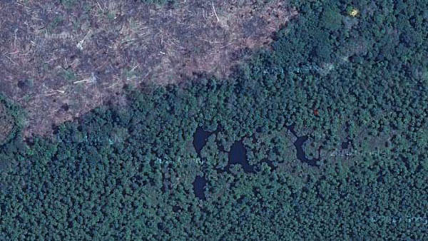 Aerial view of the clear-cut jungle just beside the Floating Forest, a severe threat to the anaconda population there. Photo courtesy of Paul Rosolie.