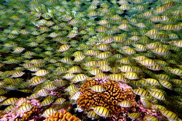 Marine abundance in a coral reef. Photo by: Katie Davis.