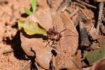 Leaf-cutter ants [bonito_0089]
