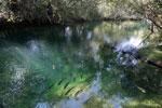 Fish in the Rio Formoso [bonito_0155]