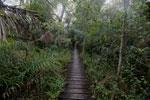 Wood walkway at Hotel Cabanas [bonito_0356]