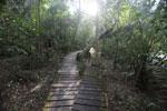Wood walkway at Hotel Cabanas [bonito_0357]