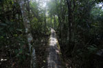 Wood walkway at Hotel Cabanas [bonito_0359]