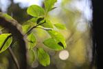 Rainforest leaves [bonito_0696]