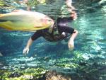 Snorkeling in the Rio da Prata [bonito_0771]