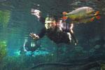 Snorkeling in the Rio da Prata [bonito_0780]