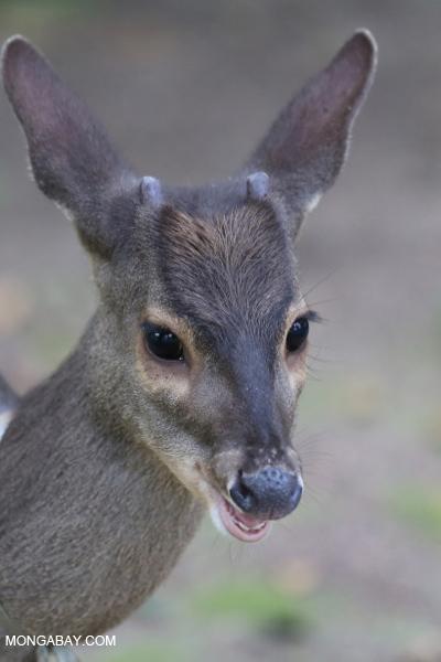 Deer [bonito_0353]
