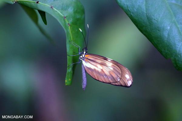 Butterfly [bonito_0611]