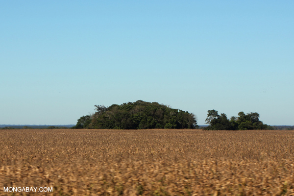 A forest fragment rising from a cornfield in Brazil. Photo by: Rhett A. Butler.