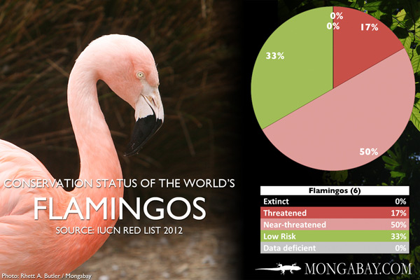 Chart: conservation status of the world's flamingos