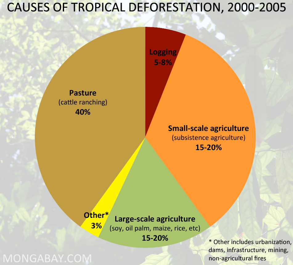 tropical rainforest deforestation case study Deforestation in the tropics affects climate a worldwide study into the deforestation of tropical just a carbon store deforestation and land use.