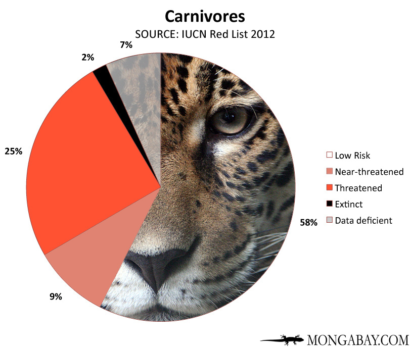 Chart: conservation status of the world's carnivores