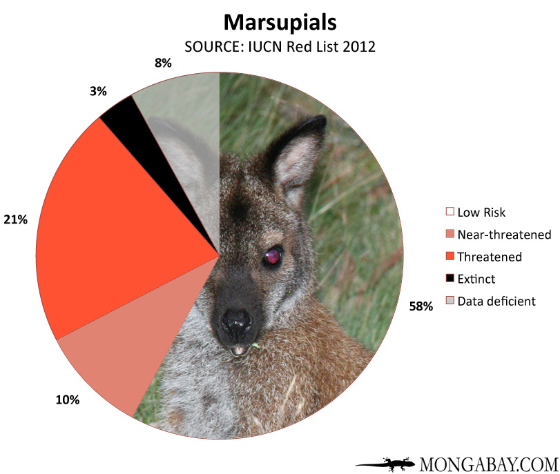 Chart: conservation status of the world's marsupials