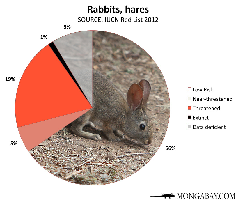 Chart: conservation status of the world's rabbits