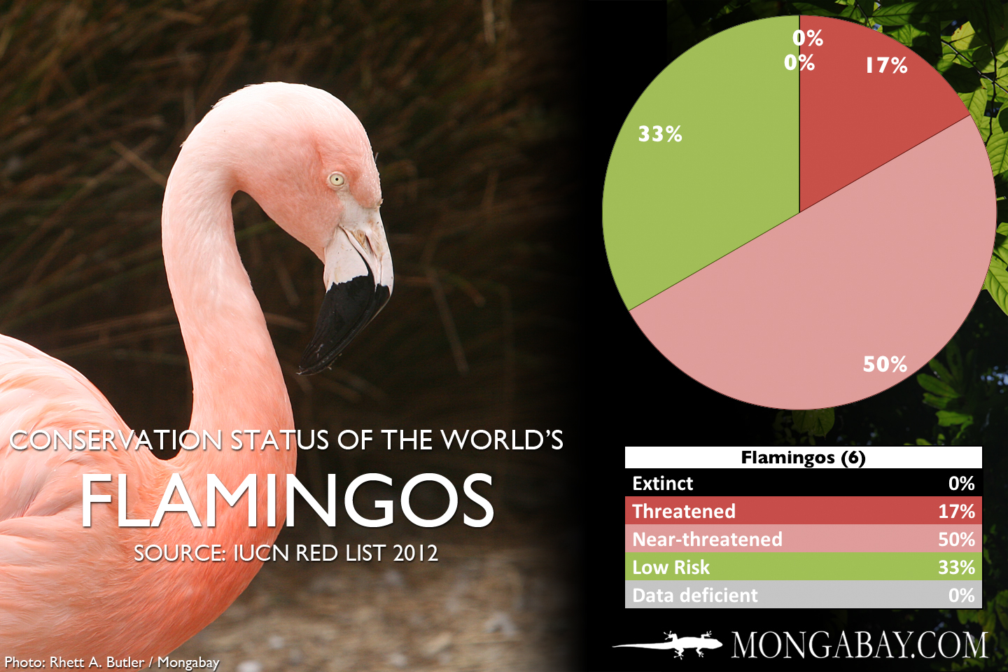 Flamingos live on the coast of africa and aisa