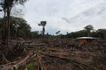 Small scale deforestation in the Colombian Amazon