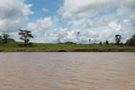 Pasture on the bank of the Amazon river