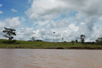 Cattle ranch on the bank of the Amazon river