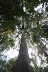 Canopy tree-climbing platform in Amacayacu National Park