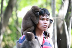 Common woolly monkeys at a rehabiltiation center for animals once trafficked for the pet trade