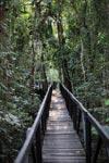 Raised rainforest walkway at Amacayacu