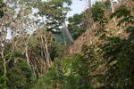 Deforestation of a steep hillside