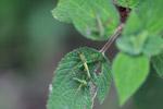 Multicolored grasshopper [colombia_1701]