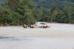Cowboys herding cattle across a river [colombia_2051]