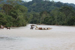 Cowboys herding cattle across a river [colombia_2057]