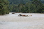 Cowboys herding cattle across a river [colombia_2064]