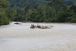 Cowboys herding cattle across a river [colombia_2068]