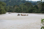Cowboys herding cattle across a river [colombia_2071]