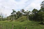 Cattle pasture and rainforest near Peñaloza [colombia_2109]