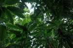 Rainforest of the Darien