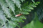 Orange bug [colombia_2866]
