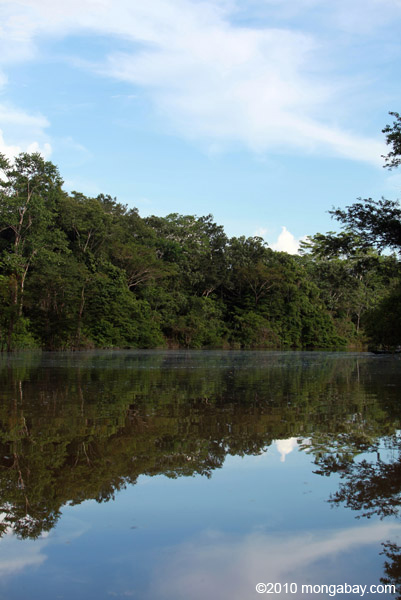 Rainforest tributary of the Amazon