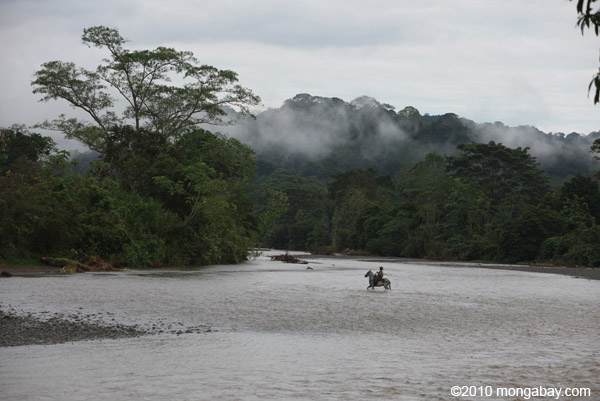 Colombian cowboy crossing a river on horseback. Photo by Rhett A. Butler.