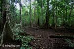 Lowland rainforest in Java's Ujung Kulon