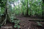 Dataran rendah hutan hujan di Jawa Taman Nasional Ujung Kulon