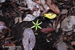 Fallen rainforest flower