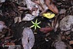 Fallen rainforest flower