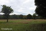 Grassland at Cidaon